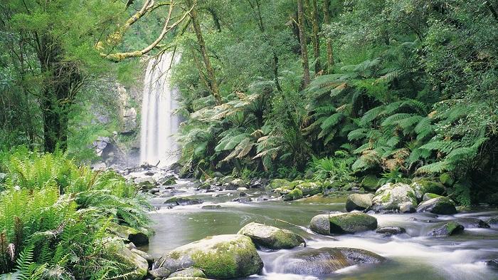 Công viên Quốc Gia Dandenong