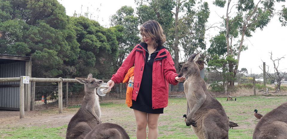 Những con chuột túi Kangaroos du lịch Úc