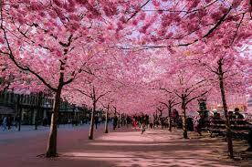 Sự hấp dẫn của Tokyo trong du lịch Nhật Bản