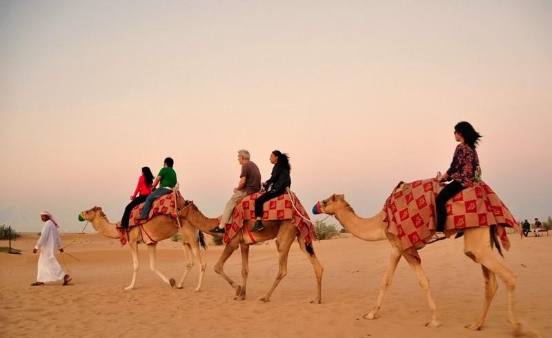 lạc đà trên sa mạc safari ở Dubai