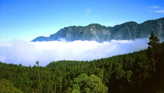 Rừng quốc gia A Lý Sơn