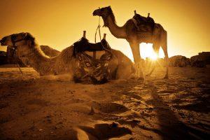 Nắng nóng – Đặc sản nổi tiếng tại Dubai
