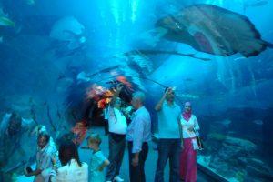 Thủy cung nhân tạo Dubai Aquarium có điều gì thú vị?