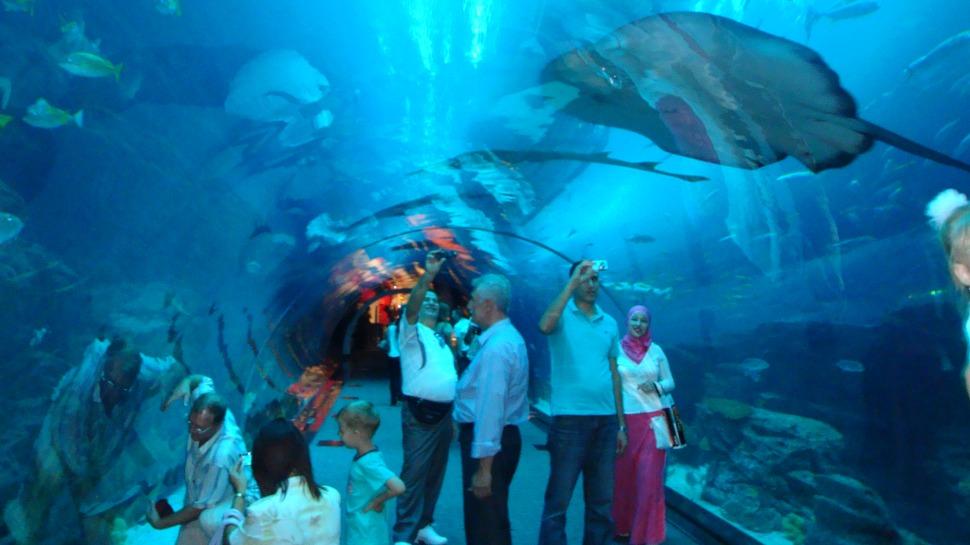 kham pha thuy cung khi di du lich Dubai