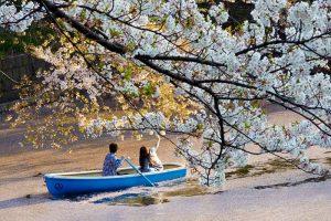 KHÁM PHÁ MỘT SỐ ĐỊA ĐIỂM NGẮM HOA ANH ĐÀO ĐẦY MÊ HOẶC Ở TOKYO