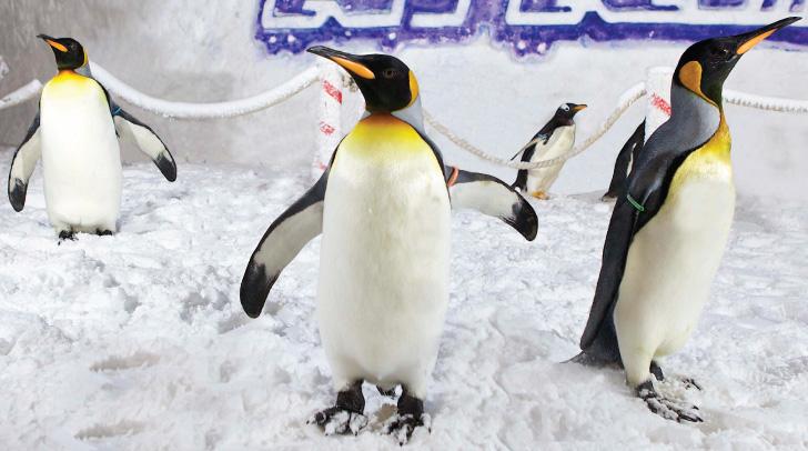 Snow Penguins dubai