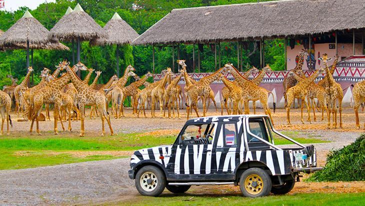 Vườn thú Safari (Safari World)