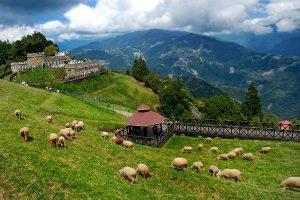 Du lịch nông trường Yilan (Nghi Lan) Đài Loan có đẹp không?