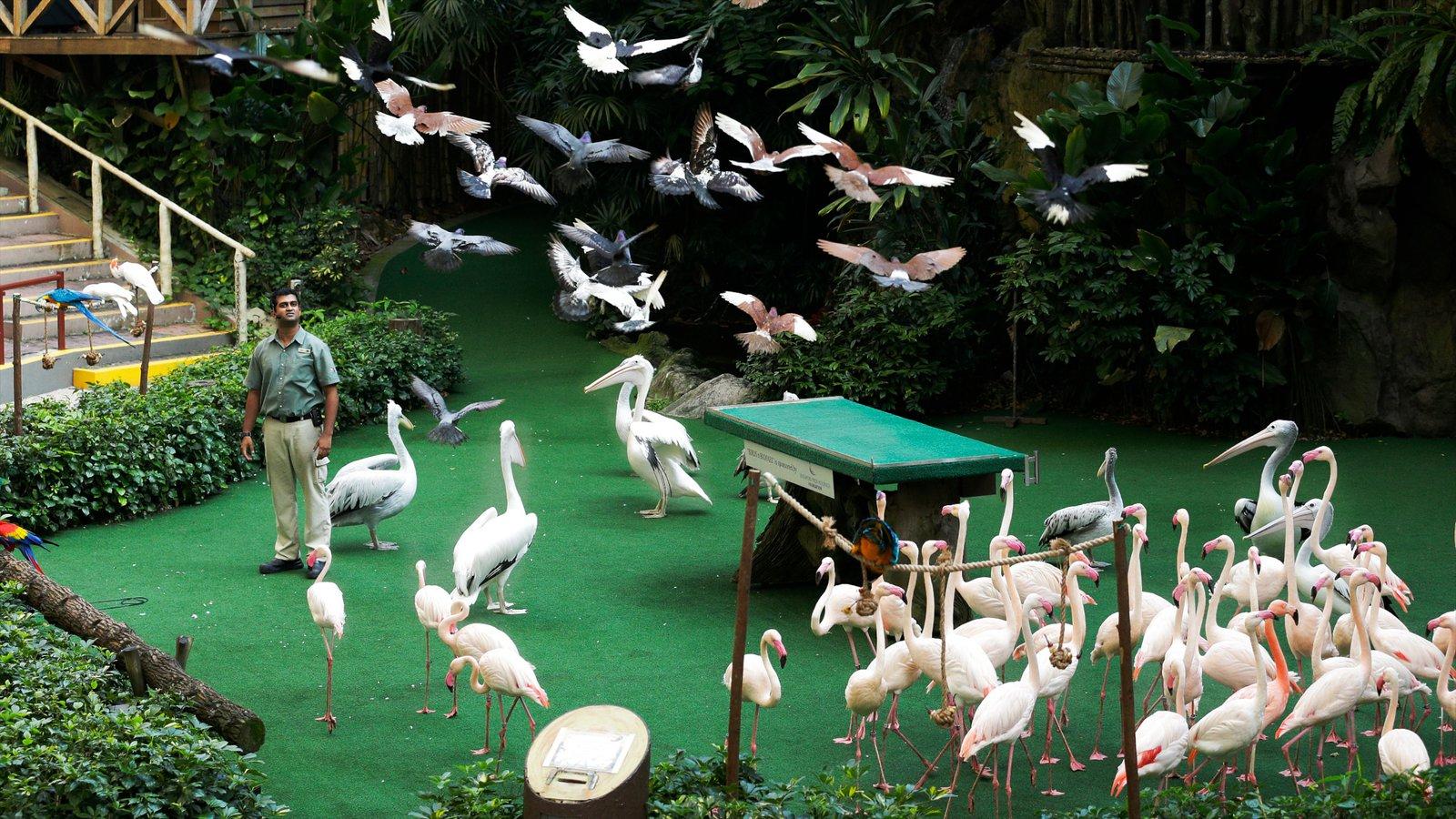 Vườn chim jurong Singapore