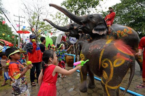 Khám phá lễ hội voi Surin tại Thái Lan