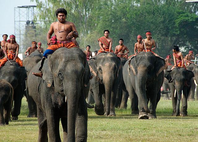 khám phá lễ hội voi surin