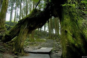 Một số điểm dừng chân tại cao nguyên Alishan, Đài loan