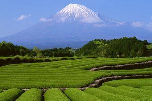 Những lí do nên du lịch Nhật Bản vào mùa hè