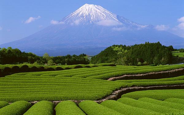 Bạn nên đi du lịch Nhật Bản vào mùa hè