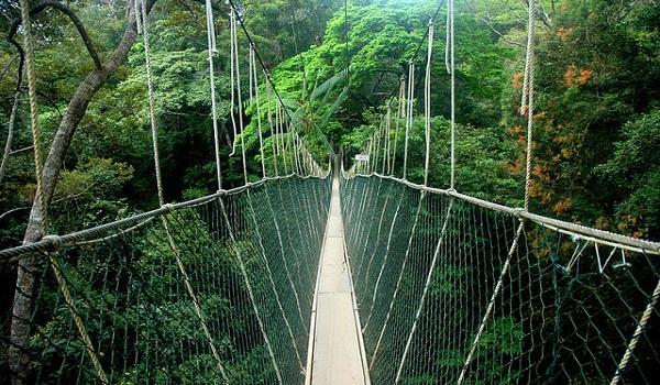 Công viên quốc gia Taman Negara, Malaysia