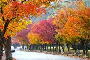 Vì sao bạn nên đi du lịch Hàn Quốc vào mùa thu?