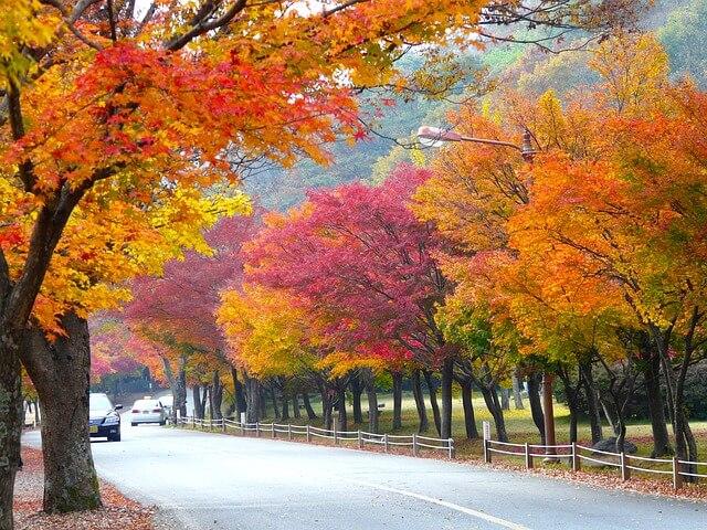 Công viên quốc gia Naejangsan, Hàn Quốc