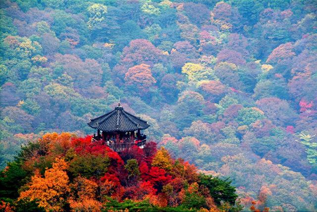 Đến Đài vọng cảnh Naejangsan khi du lịch hàn quốc mùa thu