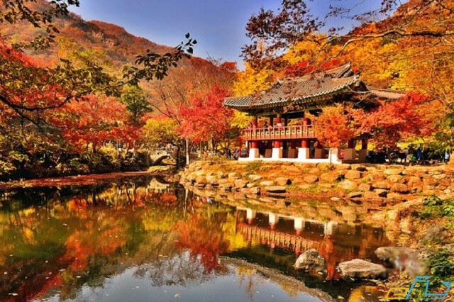 Công viên Naejangsan có rất nhiều điểm thăm quan đẹp mê hồn