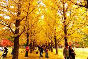 Những địa điểm không thể bỏ lỡ khi tới du lịch Hàn Quốc