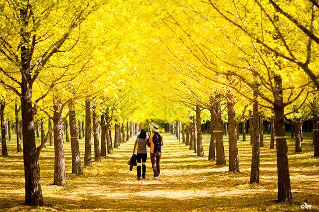Bạn sẽ tiếc hùi hụi nếu lỡ chuyến du lịch hàn quốc mùa thu