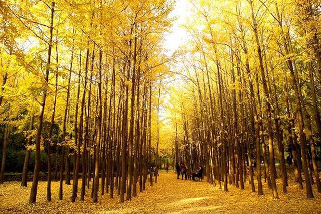 Rừng Seoul Hàn Quốc mùa thu