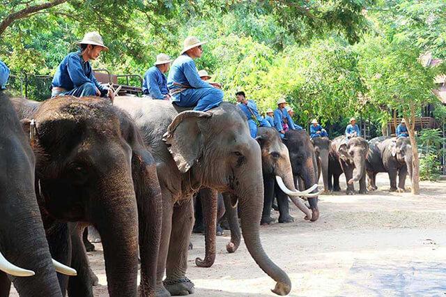 Đến với làng voi Pattaya du khách sẽ có rất nhiều kỉ niệm khó quên