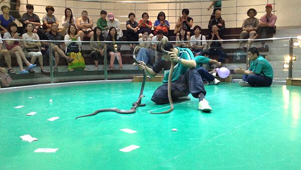 Du lịch Thái Lan đáng nhớ khi thăm trung tâm nghiên cứu rắn độc