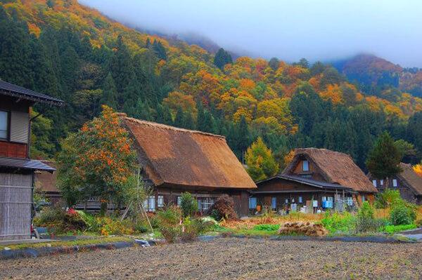 Tôi đã một chuyến du lịch Nhật Bản vào mùa thu rất tuyệt vời