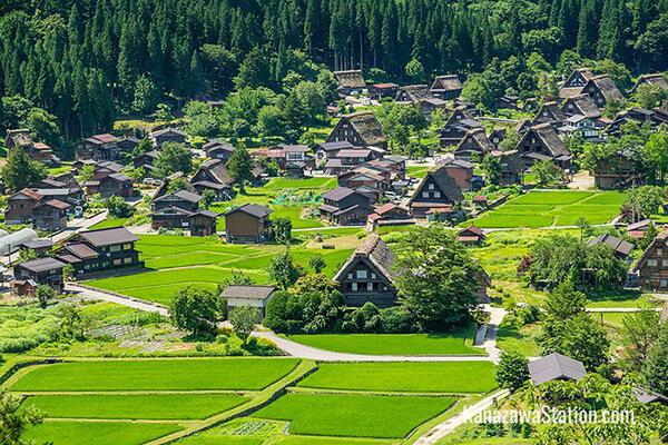 Du lịch Nhật Bản vào mùa hè để ngắm màu xanh mướt của làng cổ Shirakawago