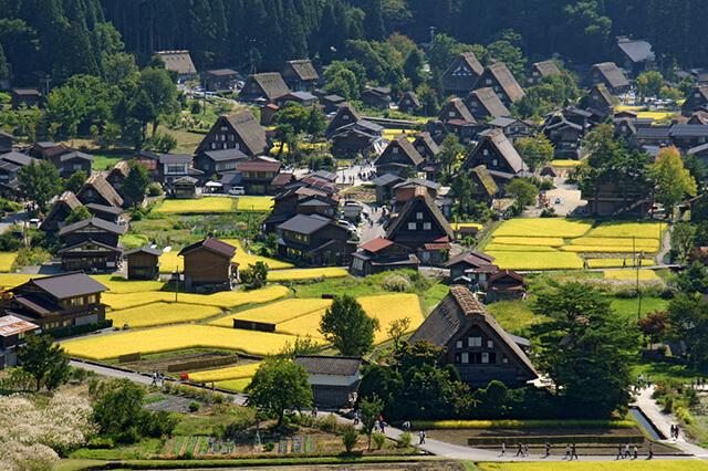 Ngắm vẻ đẹp lãng mạn của Shirakawago vào mùa thu trong tour Nhật Bản