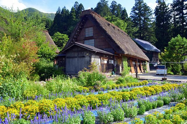 Hình ảnh và câu chuyện của những Koya gây chú ý với du khách trong tour du lịch Nhật Bản