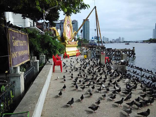 Những sinh vật sống quanh chùa Thuyền đều không sợ con người, thậm chí còn tiến lại gần để kiếm thức ăn