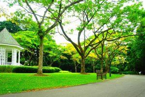 Bạn biết gì về vườn Bách Thảo Singapore