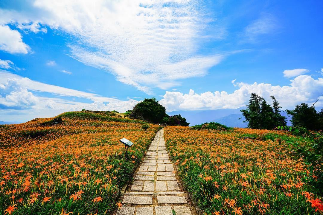 hoa Kim Châm tại Hoa Liên, Đài Loan