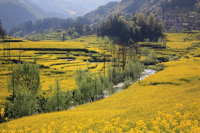 Du khách trong tour du lịch Trung Quốc khi đến Lệ Giang vào tháng 10 còn được chiêm ngưỡng những cánh đồng vàng ruộm, đương mùa thu hoạch