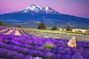Mùa hè Nhật Bản nên tham quan những điểm du lịch nào?