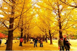 Nên đi tour du lịch Hàn Quốc tháng nào đẹp nhất?