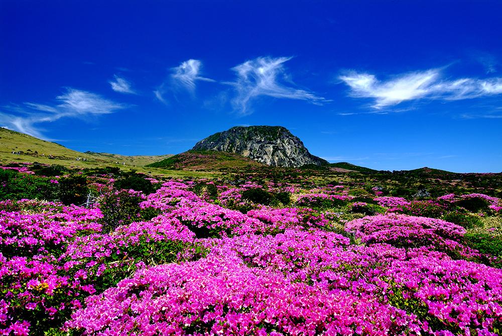 mùa xuân ở Hallasan Hàn Quốc
