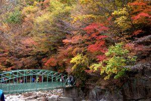 Ngắm cảnh những ngọn núi đẹp nhất mùa thu lá vàng Hàn Quốc