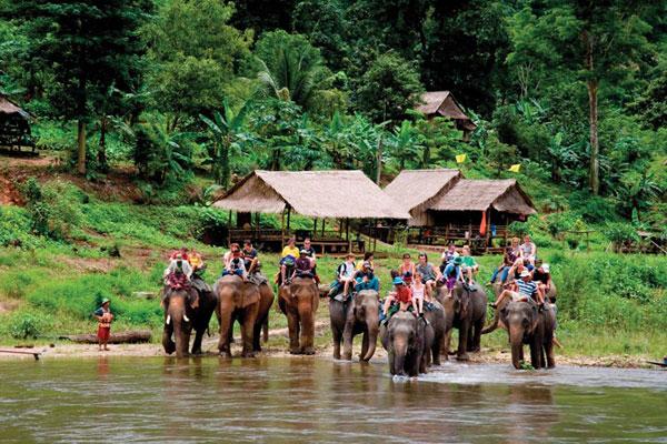 Tắm voi dưới suối ở Chiang Mai
