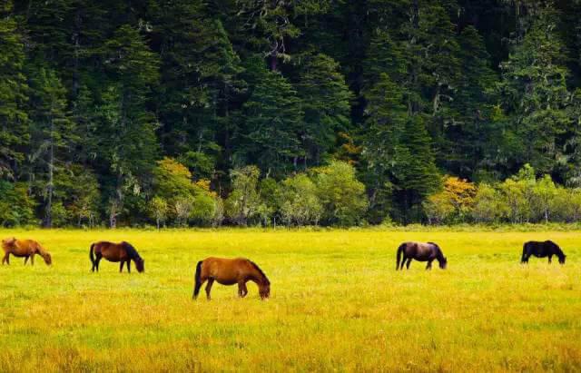 Đến vườn Quốc gia Pudacuo du khách sẽ được đắm chìm trong không gian thiên nhiên rộng lớn, mát lành, được ngắm nhìn những bầy gia súc thong dong dặm cỏ
