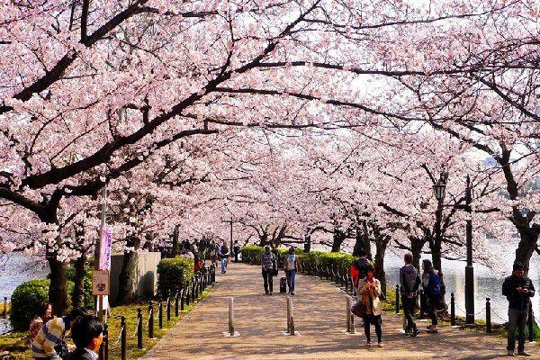 Công viên Ueno, Nhật Bản