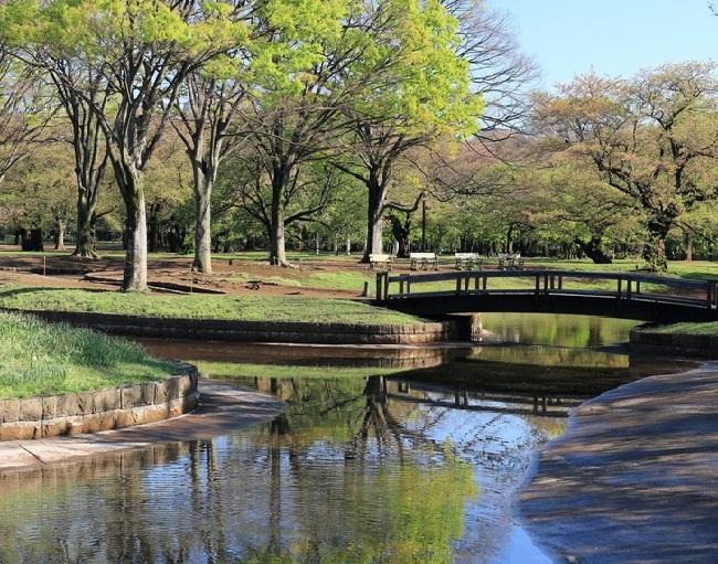 Công viên Yoyogi, Nhật Bản