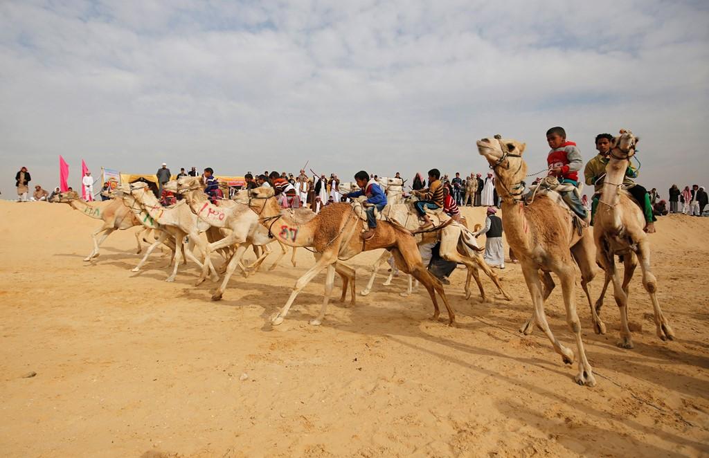 Tham dự lễ hội đua lạc đà, Dubai