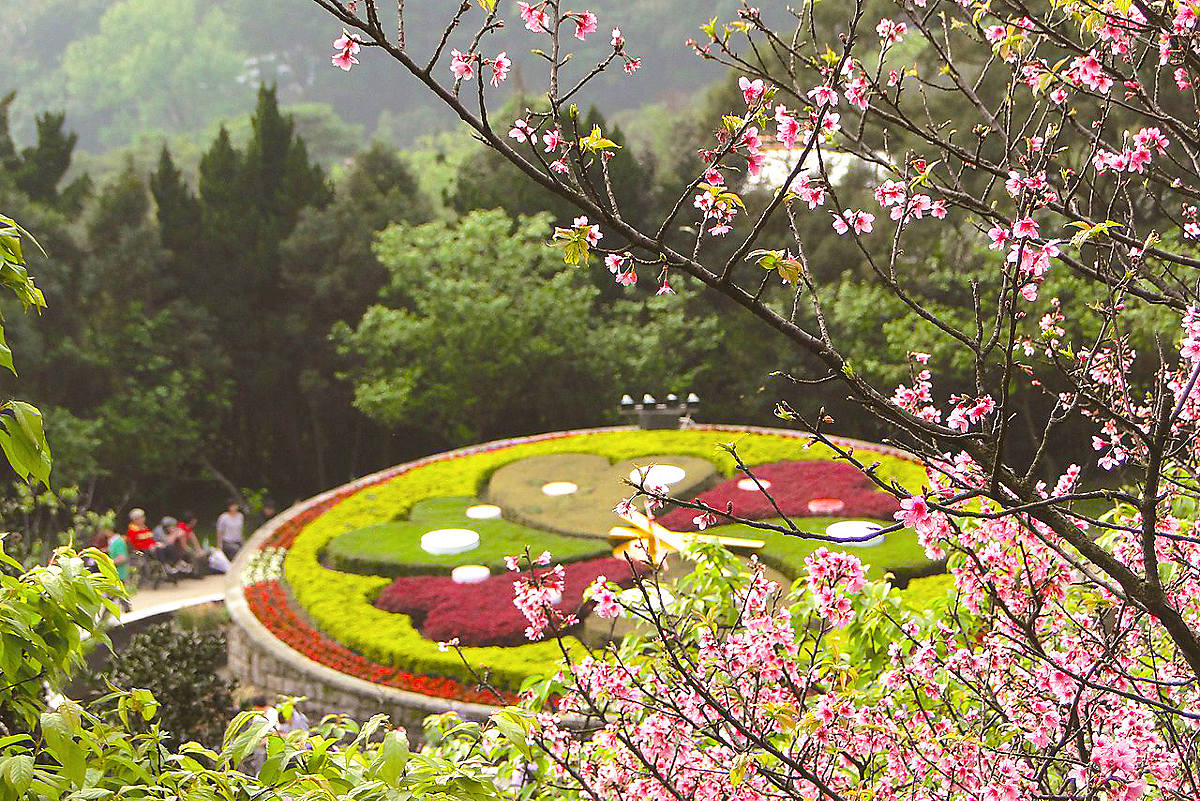 Ngắm hoa anh đào ở Dương Minh Sơn