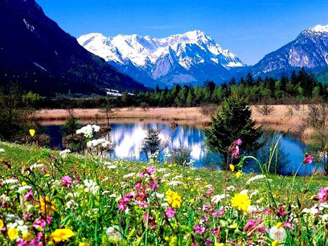 Mùa xuân đến toàn Lệ Giang ngập tràn nhựa sống và sắc hoa