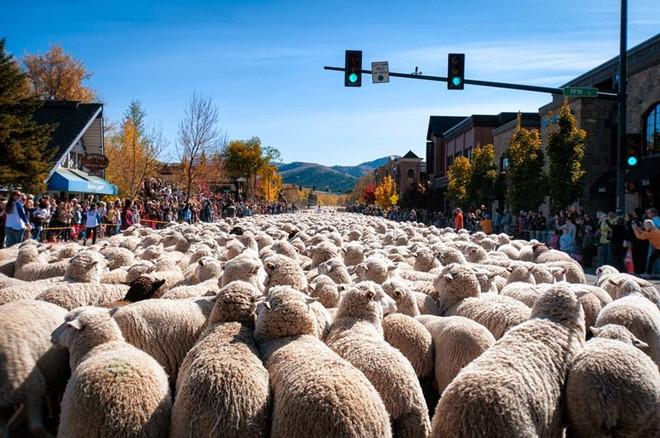 lễ hội chăn cừu, nước Nga