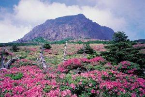 Những điều cần biết khi đi du lịch đảo Jeju Hàn Quốc