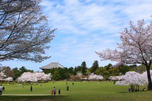 Một vài địa điểm du lịch Nhật Bản nổi tiếng ở thành phố Nara